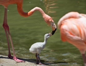 Photoblogging: Flamingo Family