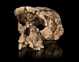 The Most Fascinating Human Evolution Discoveries of 2013
