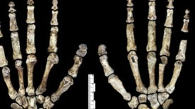 <i>Homo naledi</i> and Human Nature