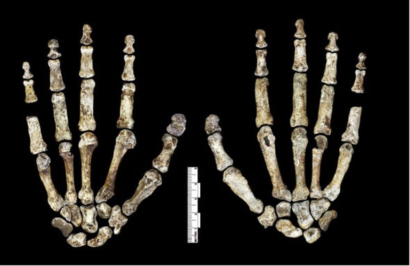 <i>Homo naledi</i> and Human Nature