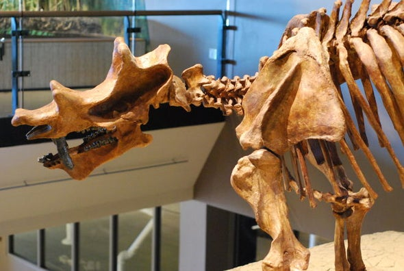 The Time 19th-Century Paleontologists Punched It Out