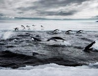 Are Antarctica's Southern Ocean Ecosystems Doomed to Death by Diplomatic Paralysis?