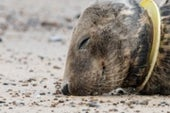 The Private Sector Must Pitch In More to Protect Marine Mammals