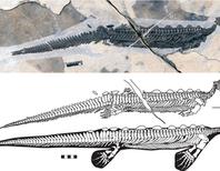 Strange Marine Creature Resembles a Reptilian Platypus