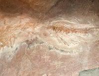 Paleo Profile: The Genga Lizard
