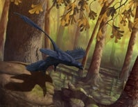 Flight of the Microraptor