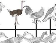 Mass Survival of Multitudinous Dinosaur Lineages across the K–Pg Boundary