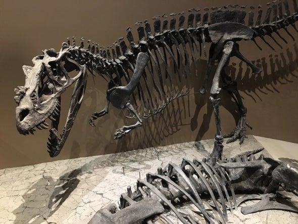 Paleontologists Investigate a Jurassic Bite