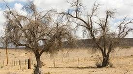 Creeping toward Permanent Drought
