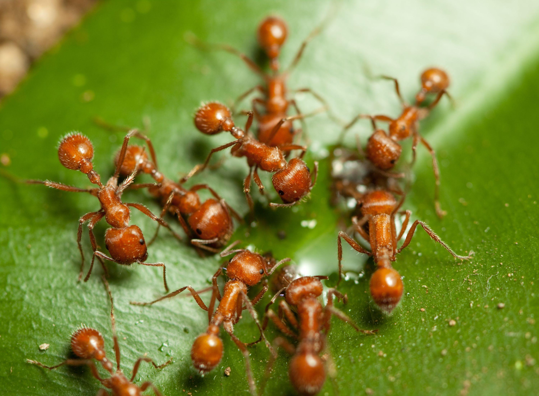Cómo se identifican los insectos que pican