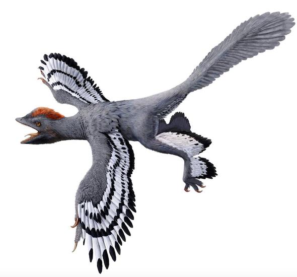 Un dinosaurio con características propias de las aves modernas