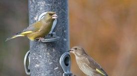 ¿Cómo lograron sobrevivir los ancestros de las aves modernas?