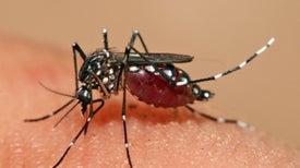 Vacuna contra el dengue resulta eficaz en gran ensayo clínico