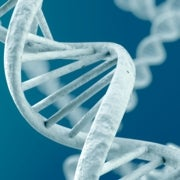 Hallan en genoma de aborígenes la huella de un nuevo antepasado de los humanos