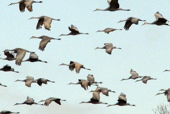Cambio climático podría hacer que las aves migren a destiempo
