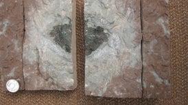 Descubren meteorito distinto de todos los demás que se han hallado en la Tierra