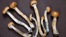 Fármaco obtenido de hongos alucinógenos alivia la depresión