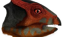 "Descubren en China nueva especie de dinosaurio con cabeza ""adornada"""