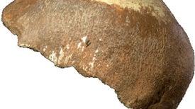 Cráneo hallado en Israel podría ser del grupo humano que se cruzó con los neandertales
