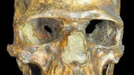 Los ancestros de los primeros europeos sobrevivieron a la última glaciación