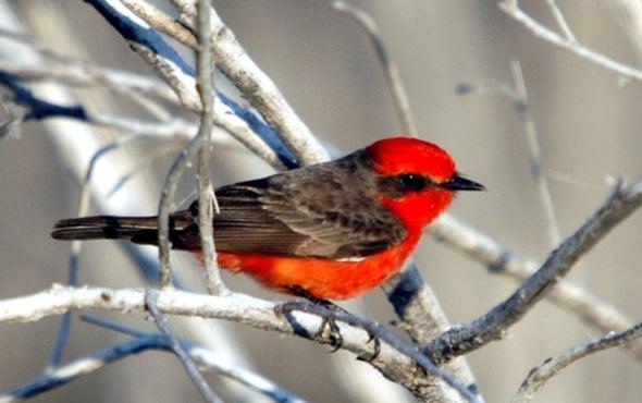 Confirman la primera extinción de aves en las Islas Galápagos