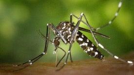 El Niño y el calentamiento global son responsables de la propagación del zika