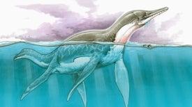 En el Cretácico, la Patagonia y Antártida fueron hogar de gigantes marinos
