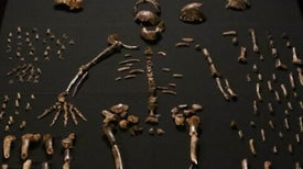 Una nueva y misteriosa especie humana emerge de una pila de fósiles
