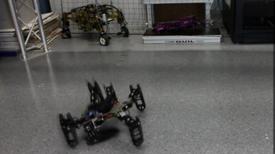 Crean robot capaz de recuperarse de forma instintiva