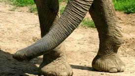 La increíble biodiversidad en torno a la huella de un elefante