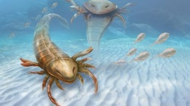 Escorpión gigante recorría los suelos marinos hace 460 millones de años