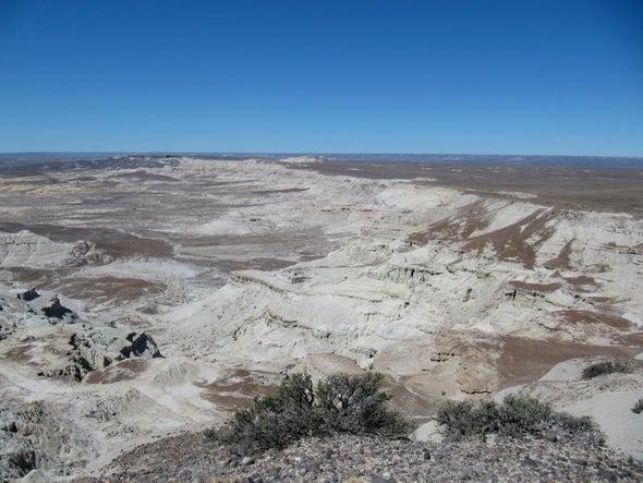 Con fitolitos, científicos reconstruyen el pasado boscoso de la Patagonia