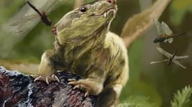 Fósiles de cinodontes hallados en Brasil revelan pistas sobre la evolución de los mamíferos