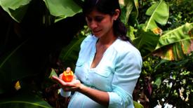 Farmacéuticas emprenden búsqueda de una vacuna contra el zika
