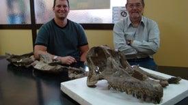 Científicos describen una nueva especie de titanosaurio hallada en Argentina