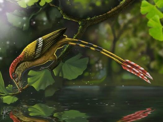 Hallan en Brasil fósil de ave de la época de los dinosaurios [con ...