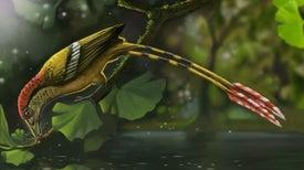 Hallan en Brasil fósil de ave de la época de los dinosaurios [con vídeo]