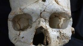 Lesiones en un cráneo resuelven homicidio de hace 430.000 años