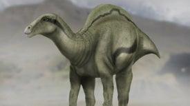 Descubierta en España una nueva especie de dinosaurio con una 'vela' en su espalda