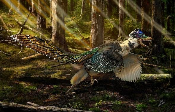 Descubren en China un pariente con plumas del 'Velociraptor'