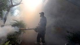 Cómo el zika escaló hasta estar fuera de control