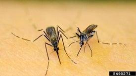 Un nuevo dispositivo permite detectar el virus chikungunya en una hora