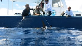 Nueva arma para proteger los océanos: sistema anticipa cuándo habrá pesca ilegal