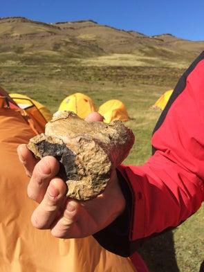 Los fósiles de la Patagonia chilena