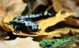 Una de cada seis especies del planeta está en riesgo de extinción por el cambio climático