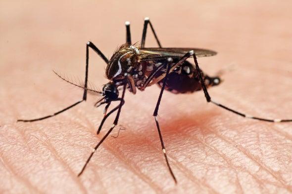 Exposición previa a dengue podría agravar infección por Zika, dicen científicos