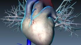 Un gen protector frente a las cardiopatías abre el camino para nuevos fármacos