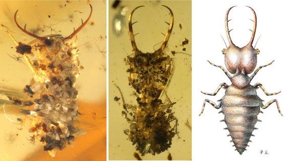 """Los insectos ya se """"disfrazaban"""" hace al menos 100 millones de años"""