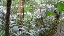 ¿Las áreas protegidas realmente mantienen a salvo nuestros bosques?