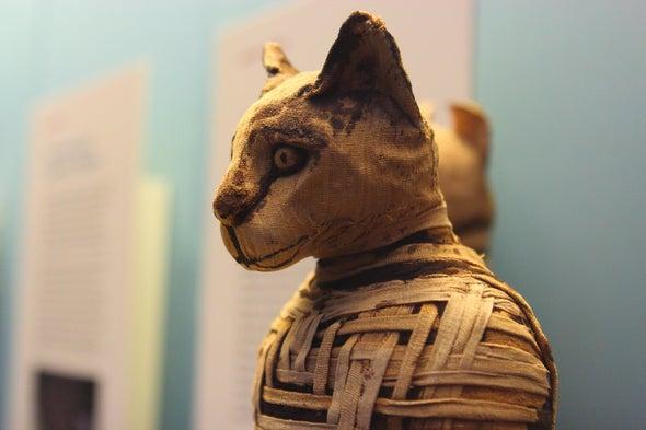 Así fue cómo los gatos conquistaron al mundo (y a unos pocos barcos vikingos)
